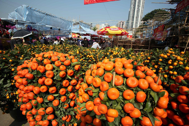 香港将举办多项活动迎新春